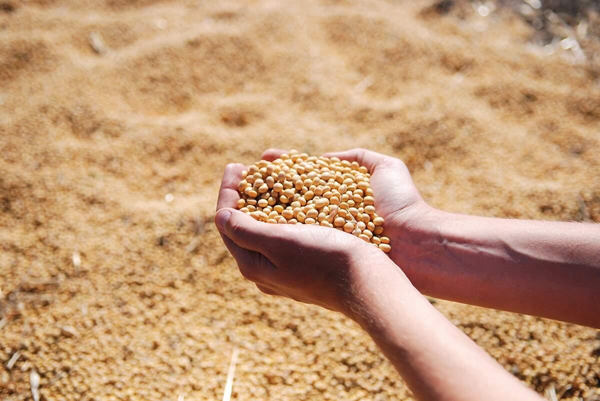 País é 'Top Five' em cerca de 30 produtos agrícolas