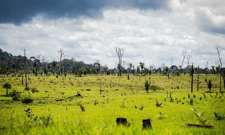 MPF acusa 2,2 mil por desmatamento ilegal de 321 mil hectares na Amazônia