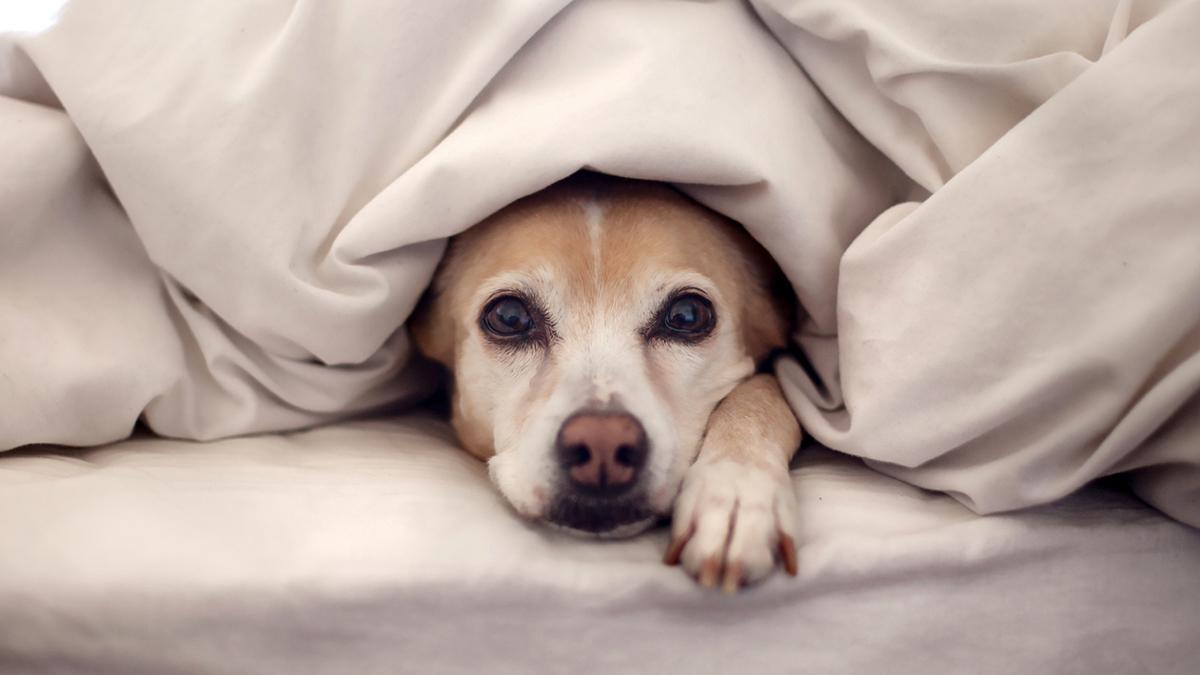 Como cuidar do seu pet no inverno