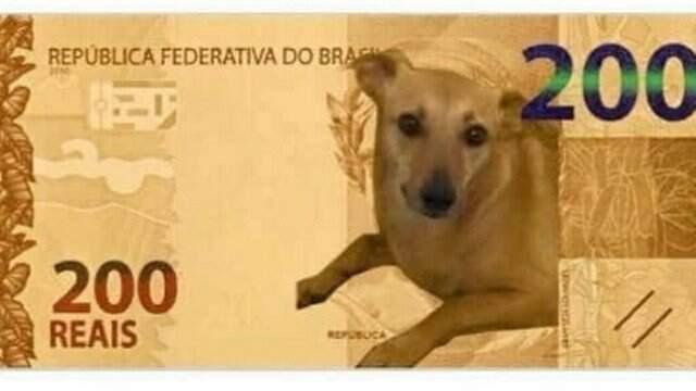 BC nega nota de R$ 200 com vira-lata caramelo mas estuda ação com animal