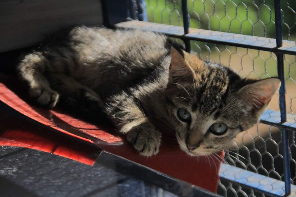 Mais de 200 animais abrigados precisam de um lar em Hortolândia