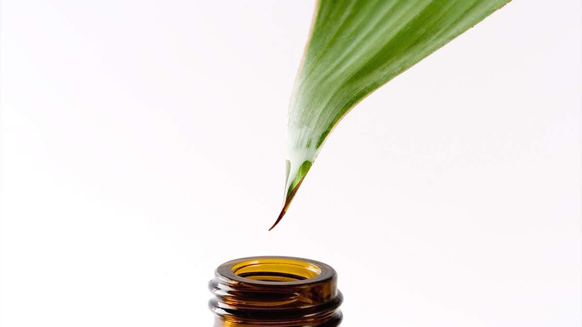O mundo dos cosméticos orgânicos