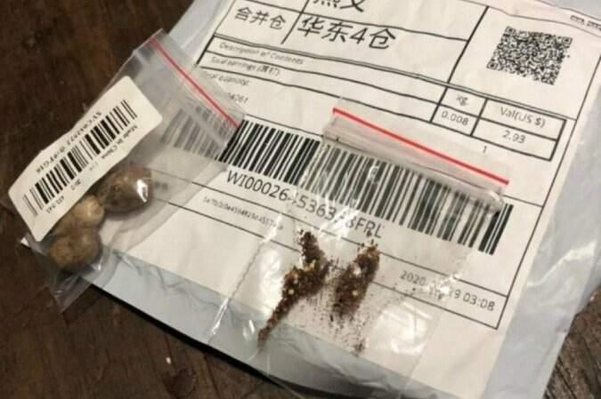 Pacotes com sementes não solicitadas contém praga inexistente no Brasil