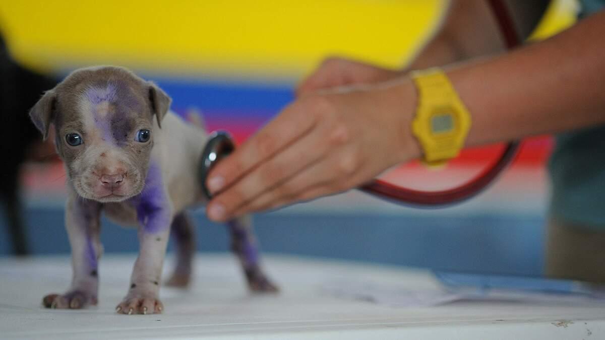 Pets também podem ter pressão alta