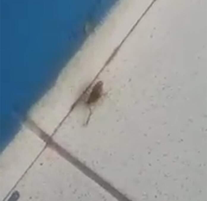 Escorpiões são encontrados no posto de saúde de Nova Veneza