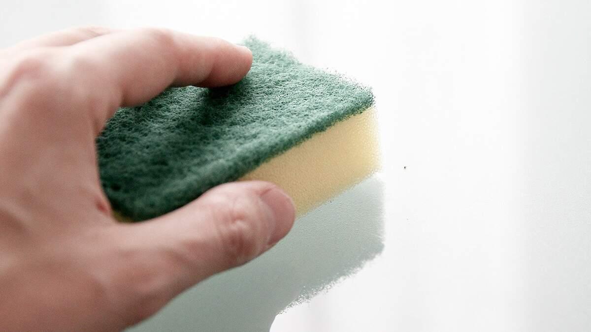 Cuidados necessários com a esponja para evitar as bactérias