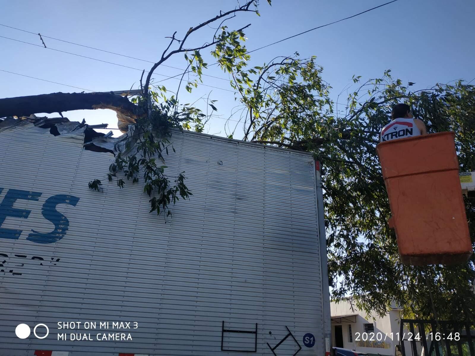 Caminhão enrosca em árvore na Avenida Armando Sales de Oliveira