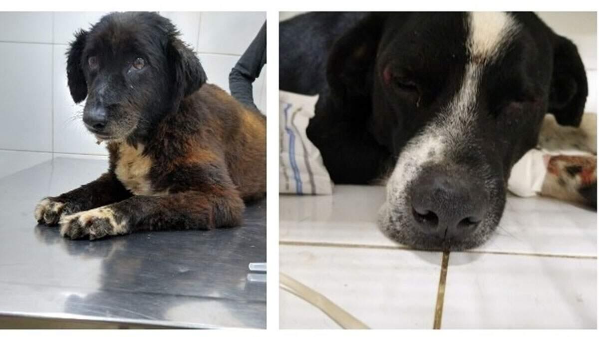Enxame de abelhas ataca associação e deixa 5 cães mortos em Nova Odessa