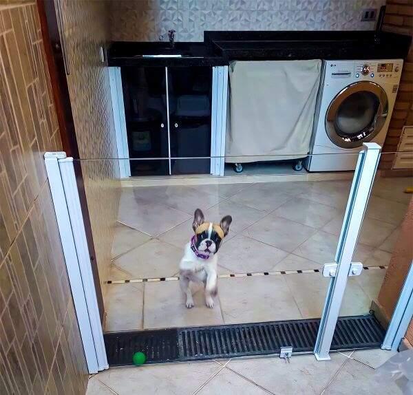 Dicas para acalmar e dar segurança aos pets