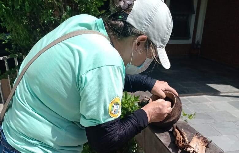 Hortolândia tem índice de larvas de dengue em alerta
