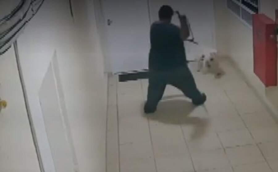 Homem é preso após agredir cão em Campinas
