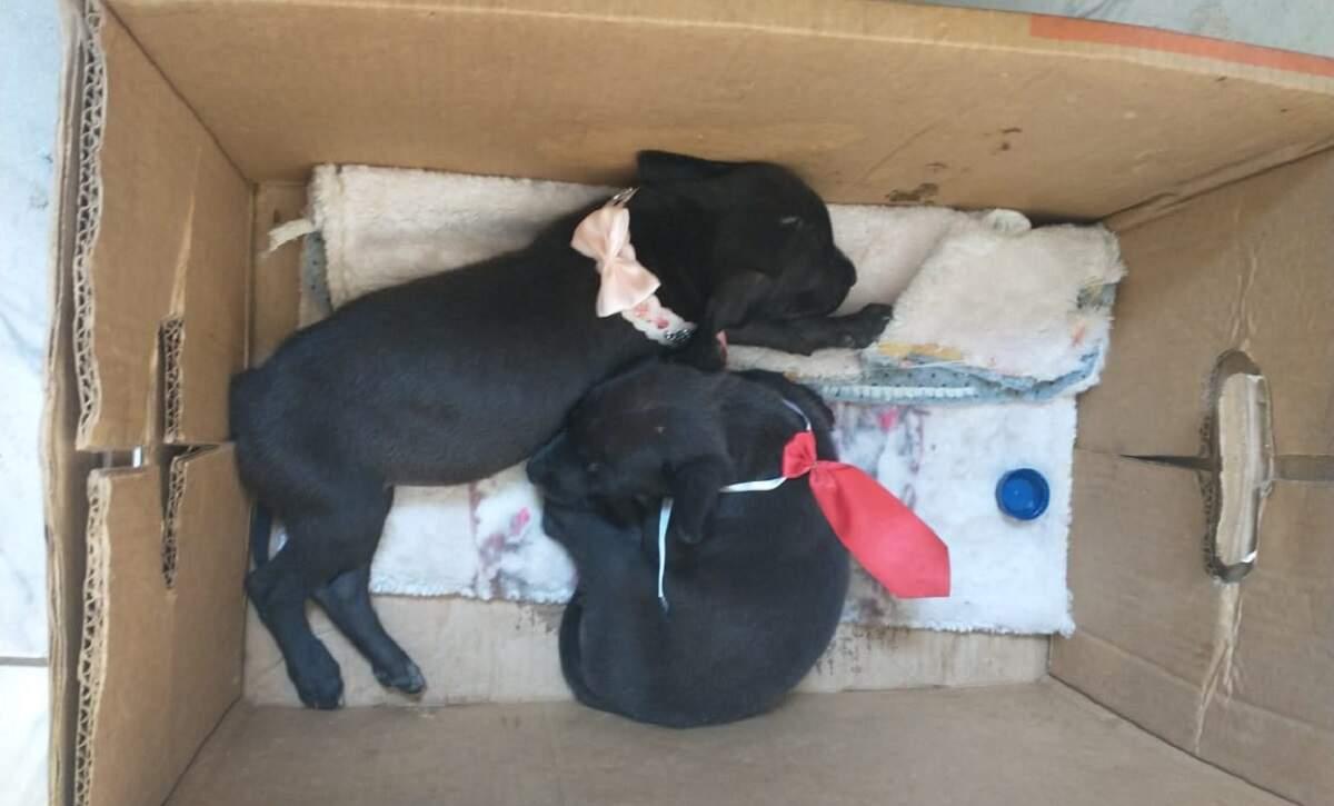 Abandonados, filhotes são colocados para doação em Nova Odessa