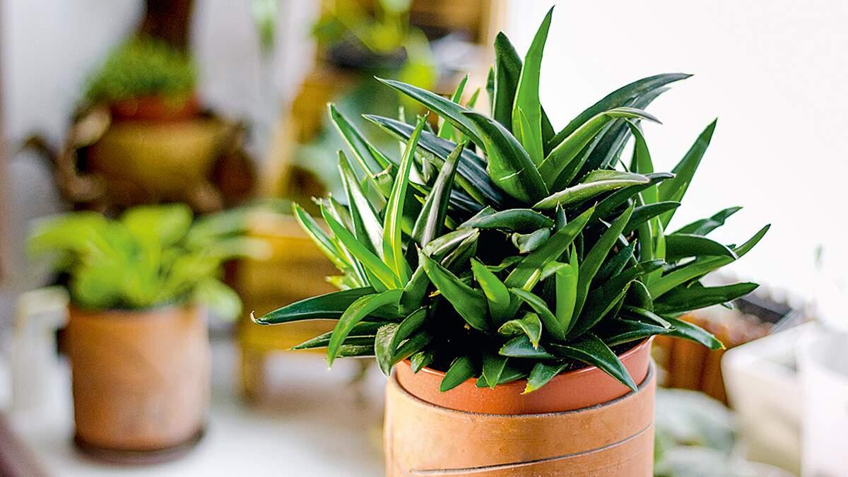 Confira 10 espécies de suculentas para cultivar em casa