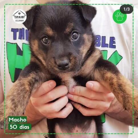 Tivoli Shopping promove Feira de Adoção de Animais na noite desta quarta-feira