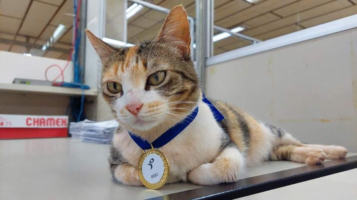 Poly: a gata do Polivalente que virou mascotinha